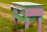 bee hive purple and green